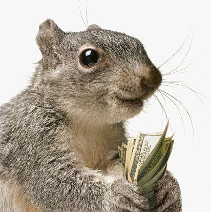 Money Squirrel