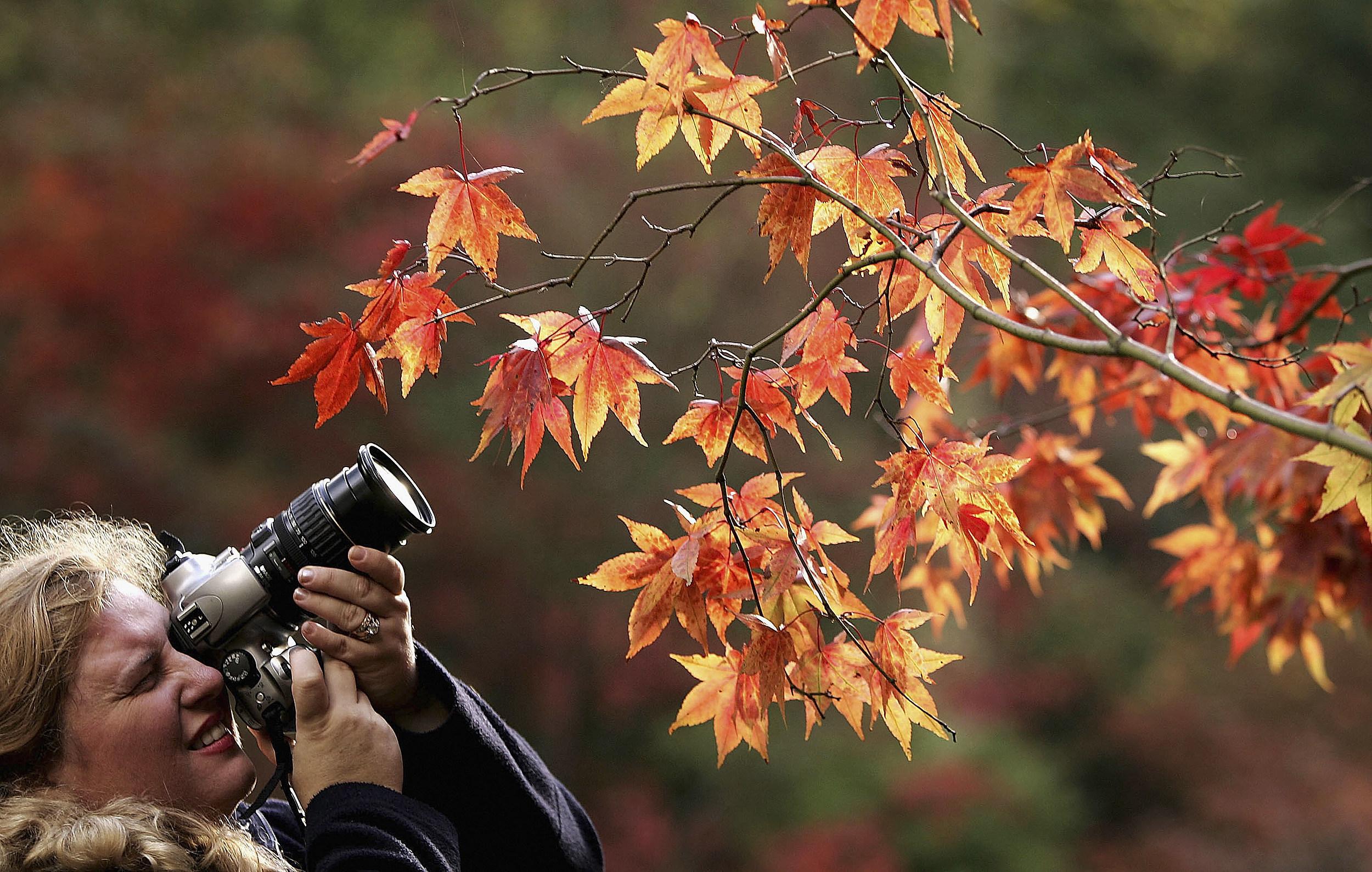 Autumn Colours At Westonbirt Aboretum