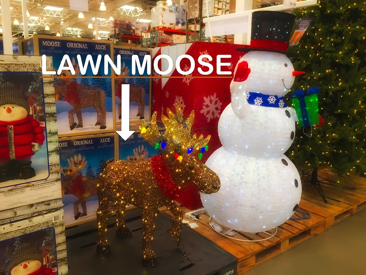 Lawn Moose