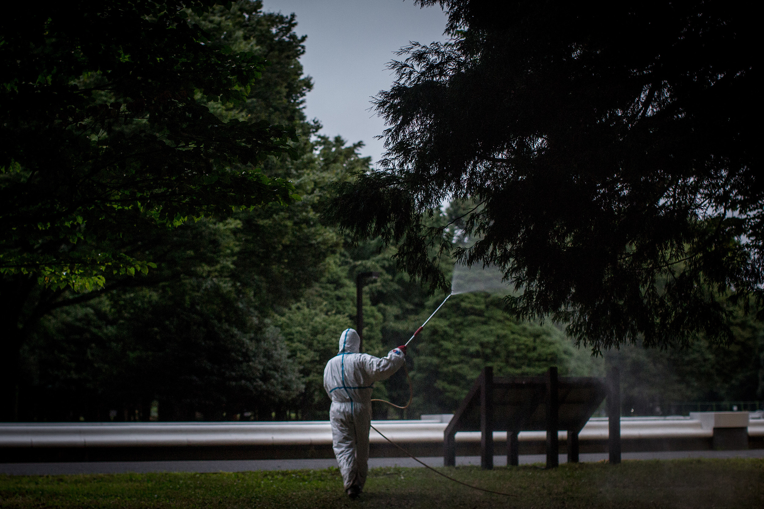 Japan Copes With First Dengue Fever Case In Nearly 70 Years